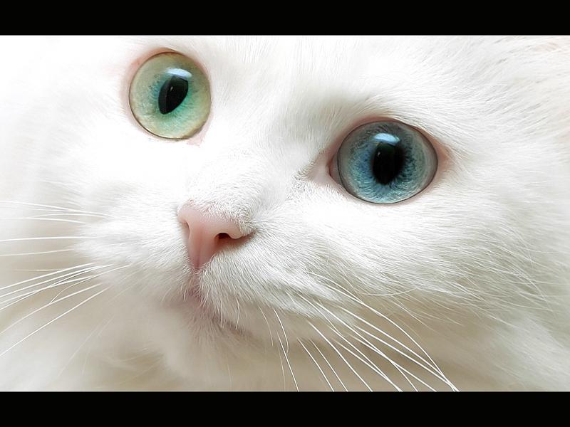 Beautiful nature beautiful cat