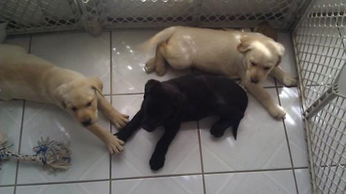 chiens <3