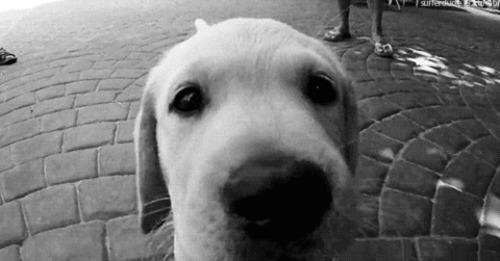 Cani <3