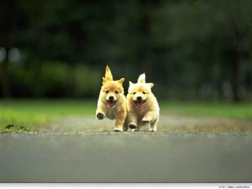 Hunde <3