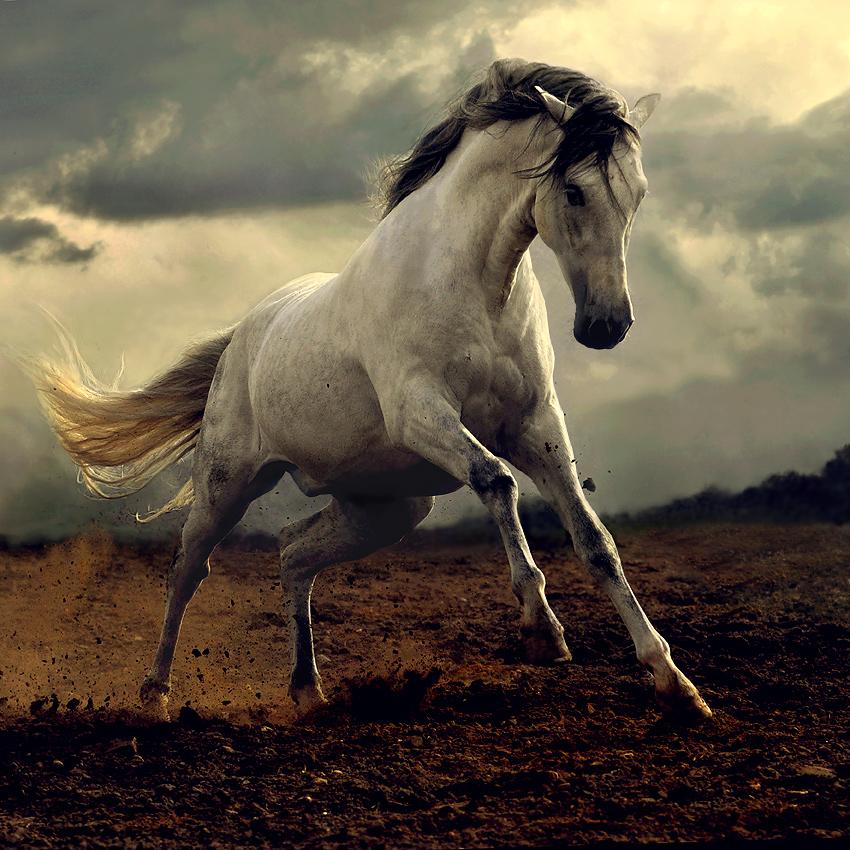Horses beautiful nature photo 23477255 fanpop for Beautiful horses