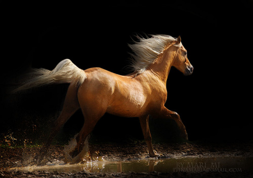 Beautiful Nature Images Horses... HD Wallpaper And
