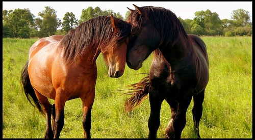 Beautiful Nature Images Horses... Wallpaper And Background