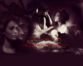 Hush, Hush Wallpaper - hush-hush wallpaper