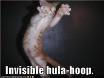 Invisible Kitties