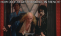 Rocky Horror Callouts - the-rocky-horror-picture-show photo