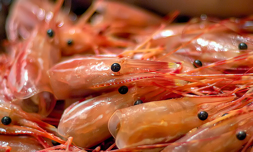 shrimp, kamba heads