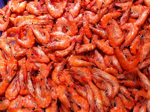 Shrimp images shrimp wallpaper and background photos for Animals that are included in the cuisine of seafood