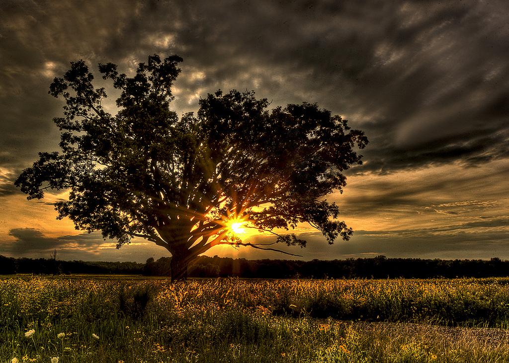 Sunset beautiful nature photo 23473749 fanpop - A live nature wallpaper ...