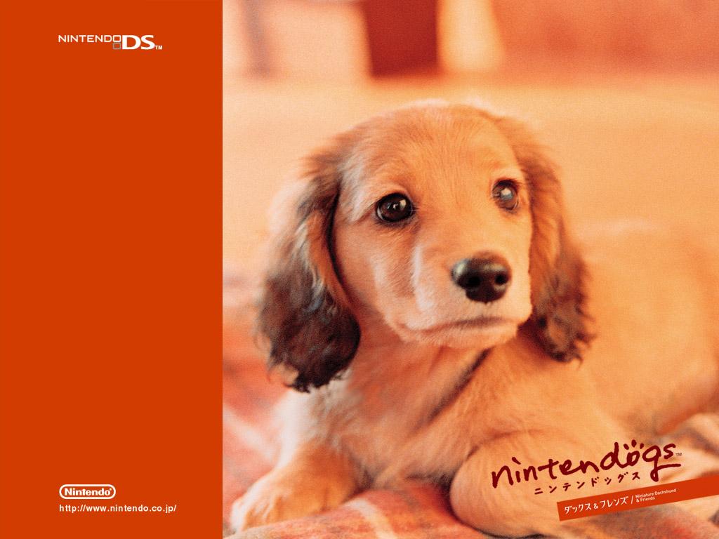 Wallpaper - Nintendogs Wallpaper (23496580) - Fanpop