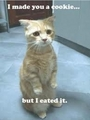 lol cats - lol-catz photo