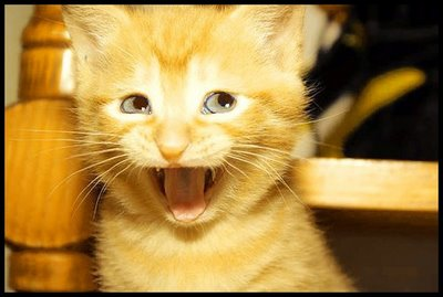 Funny Cat Faces Funny Cat Face Cartoon Images