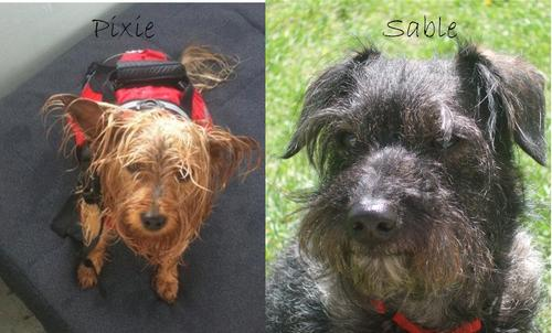 Keith's dog Pixie and My dog Sable
