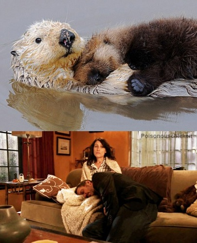 Lovely Parallels Huddy-Otters