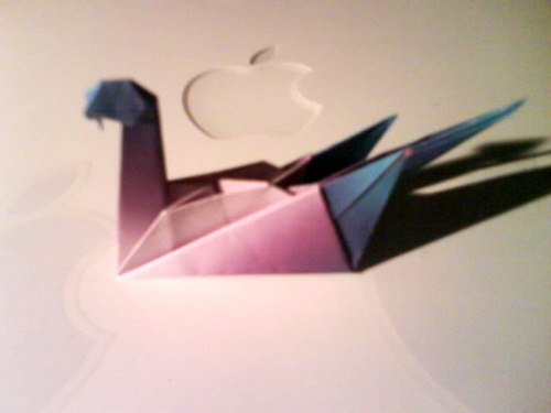 My angsa, swan