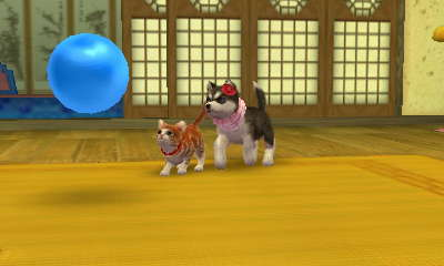 My nintendog pictures