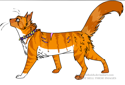 Make Your Own Warrior Cat! kertas dinding possibly containing Anime titled Onyx ^^