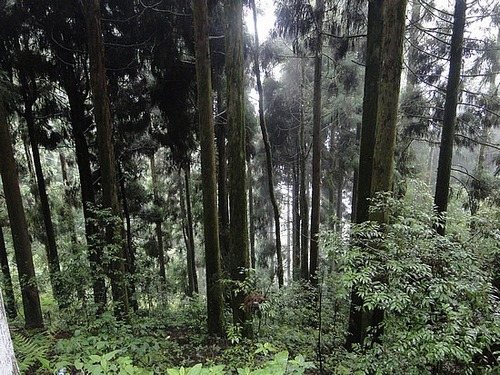 Pelling forest