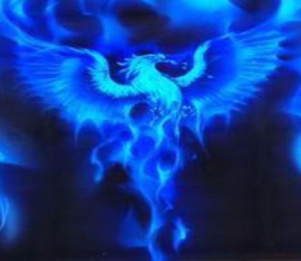 Atrobuet Phoenix Images Blue Phoenix Hd Wallpaper And Background Photos 23527375