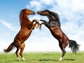 horse - horses wallpaper