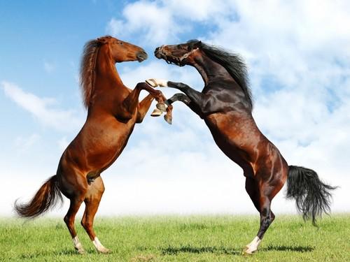 Kuda kertas dinding titled horse