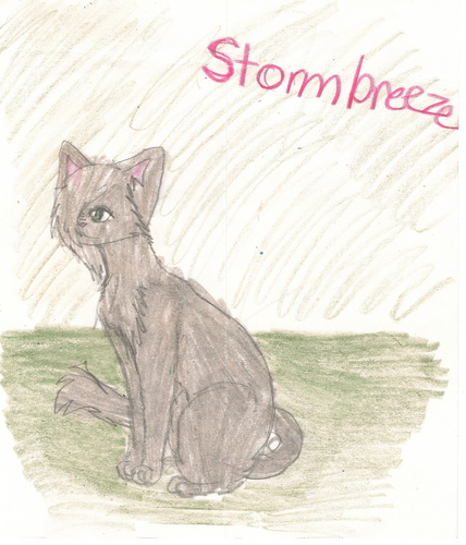 my cat,stormbreeze