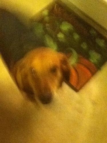 my dog isebell pie 比萨, 比萨饼 times aka lickins