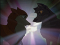shine - balto photo