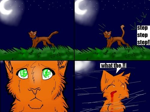 warrior gatos into the wild PART 1