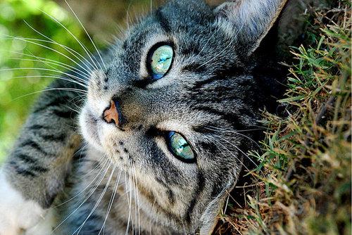 -Cats-