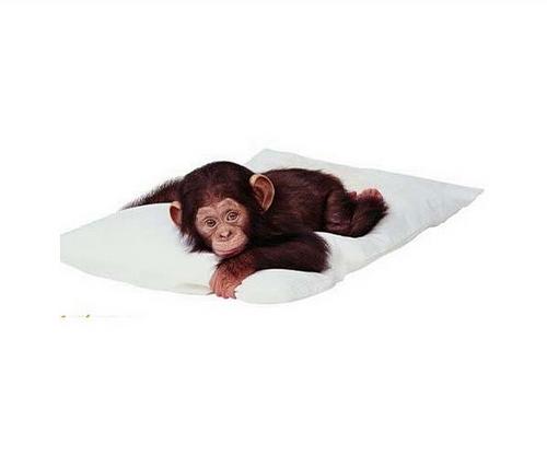 Monkeys wallpaper titled CUte Lil Mokey!!