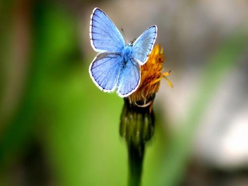 お花 and 蝶