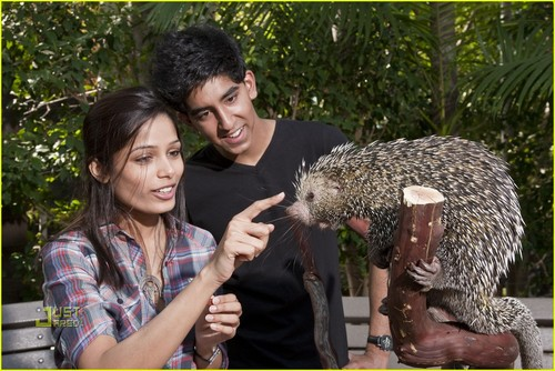Freida 斑马, pinto, 平托 & Dev Patel: San Diego Zoo Sweethearts- November 26, 2009