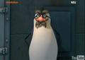 Lol - skipper-the-penguins-of-madagascar screencap