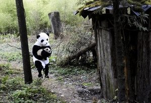 Person in a Panda Suit