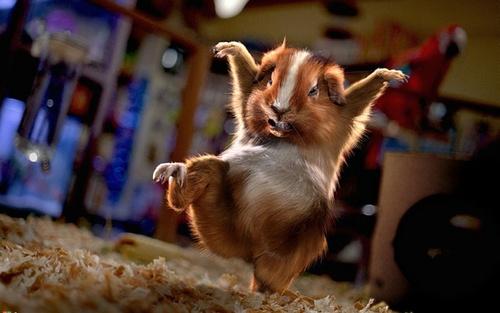 kung fu گلہری, جائے وقوع
