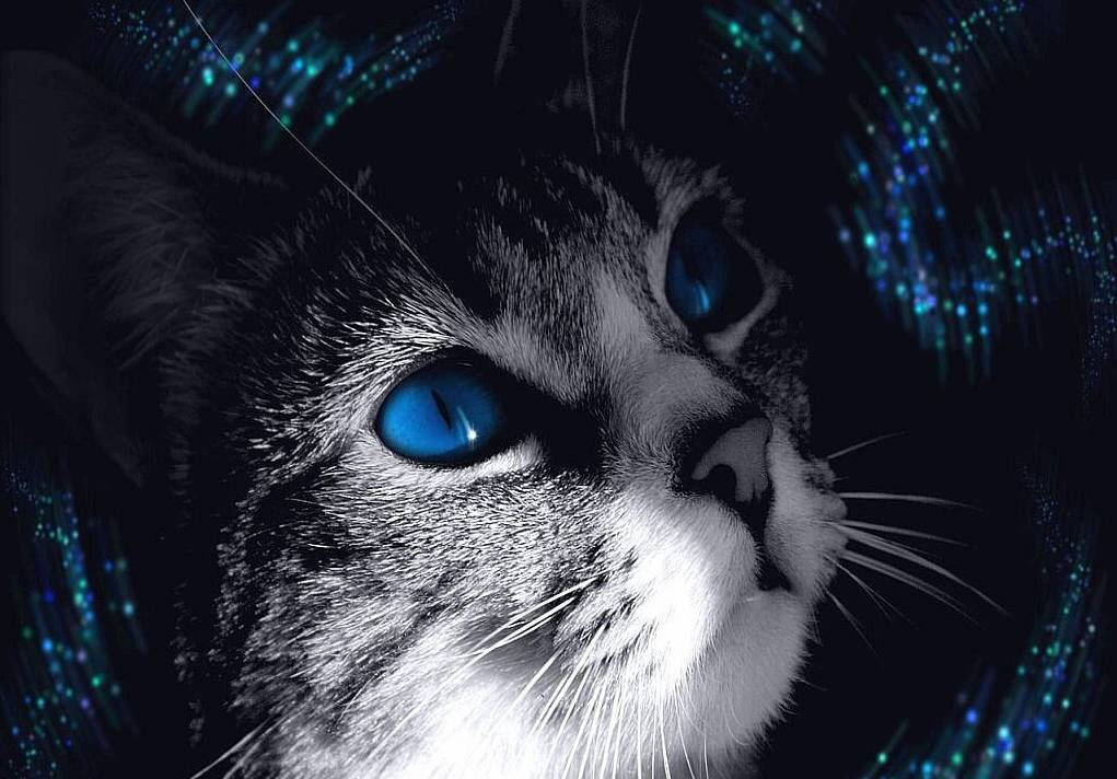 http://images4.fanpop.com/image/photos/23600000/cat-with-amazing-eyes-cats-23642199-1021-712.jpg