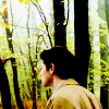 Castiel photo probably containing a sitka spruce, a beech, and common bamboo called Castiel