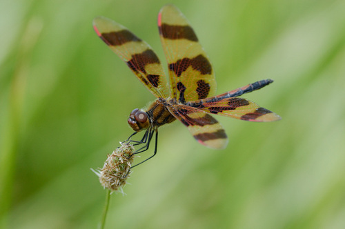 Dragonflies kwa Graham Owen