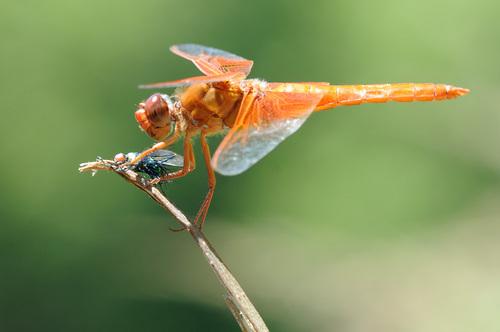 Dragonflies سے طرف کی Graham Owen