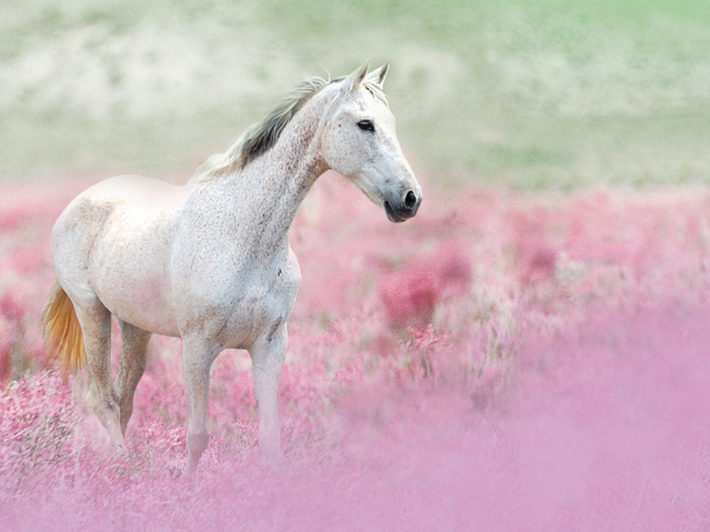 horse horses wallpaper 23799984 fanpop