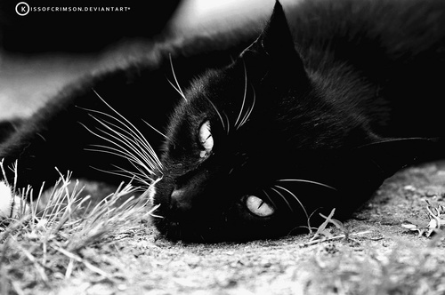 My Cat, Blacky