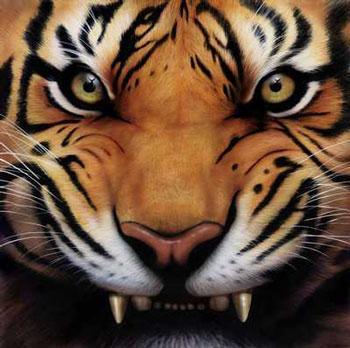 नारंगी, ऑरेंज बाघों