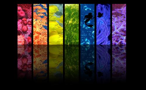 Underwater rainbow - ariel