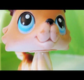 littlest pet shop popular