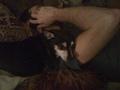my sweetiepie Bijou!! - chihuahuas photo