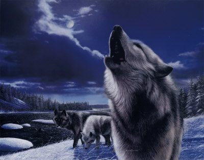 the howeling wolves of the night - wolves Photo