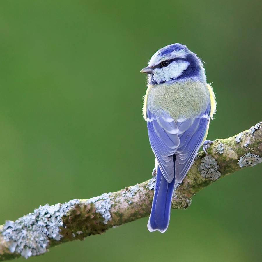 Beautiful birds beautiful nature photo 23812435 fanpop - Beautiful image ...