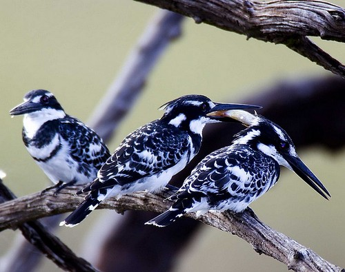 Beautiful Birds...