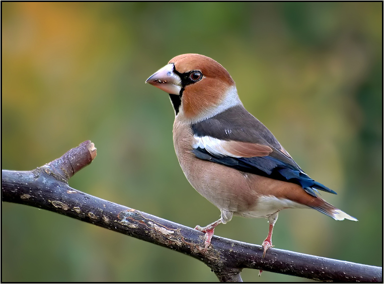 Beautiful Nature Images Beautiful Birds Hd Wallpaper And